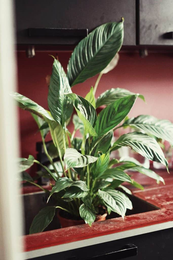 5 Easy Care Indoor Plants That Will Leave Your Home Looking Beautiful!