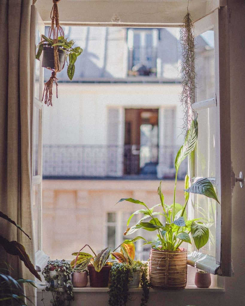 peace lily and other indoor house plants