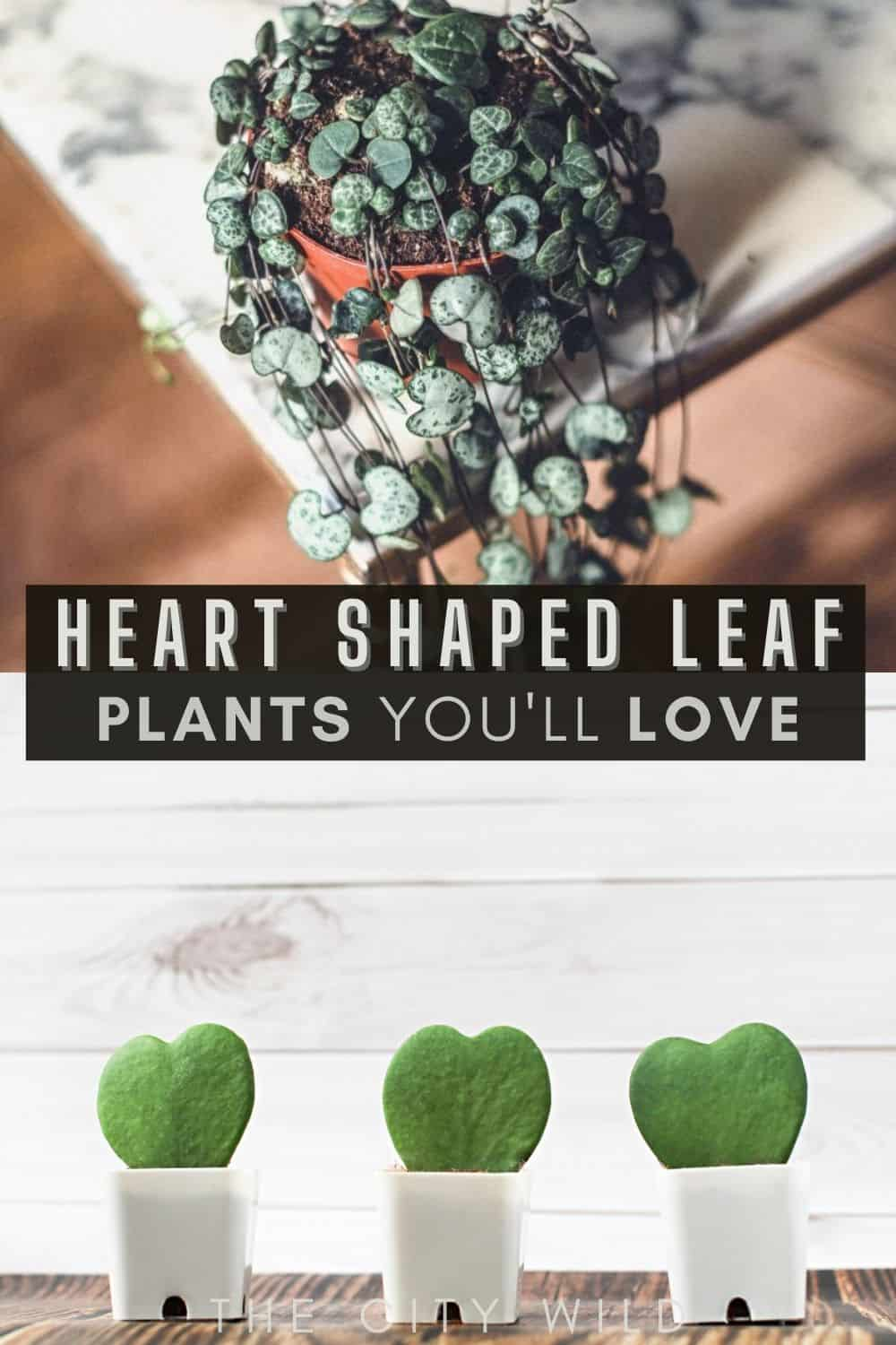 Heart shaped plants/ Plants with Heart Shaped Leaves You'll Fall in Love With